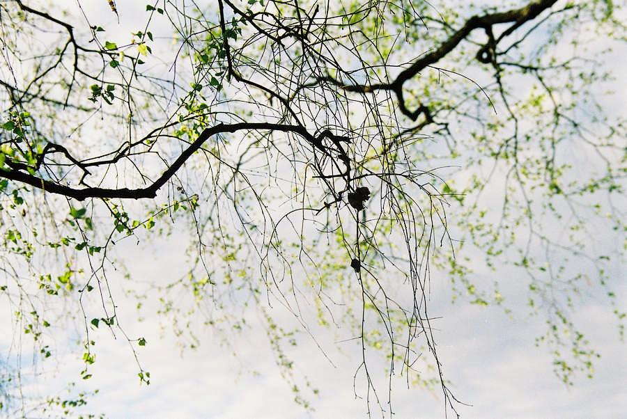 photo_00050