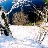 photo_00024